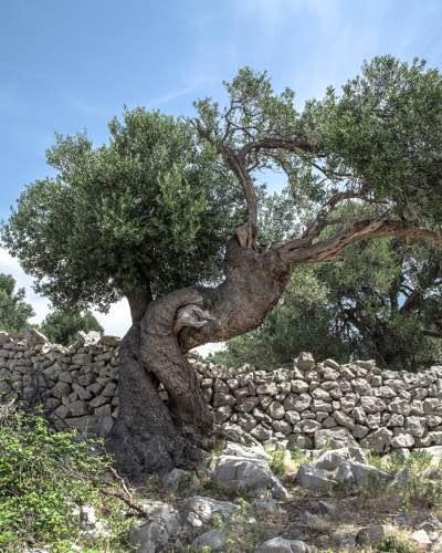israel-north